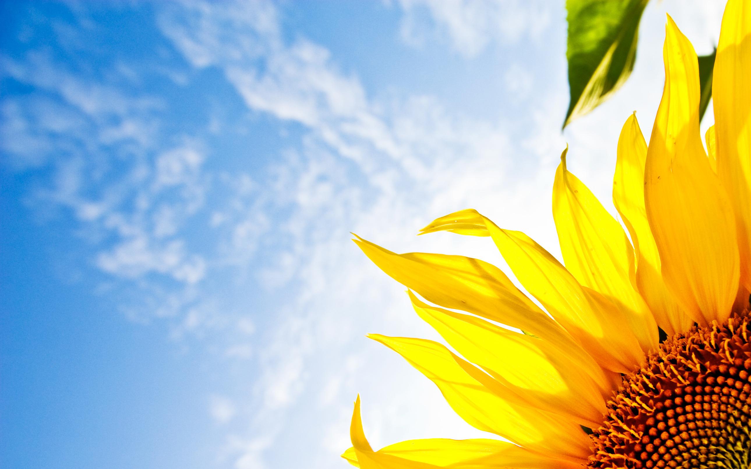 Квітка, що іде за Сонцем