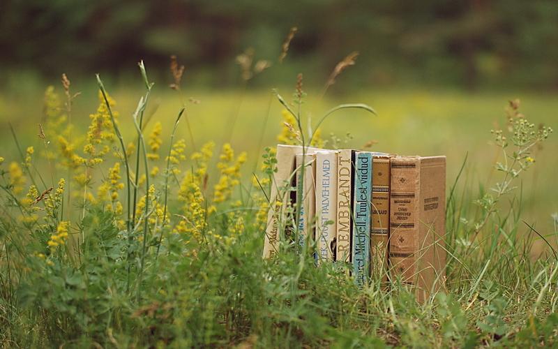 ТОП-3 книги про літо