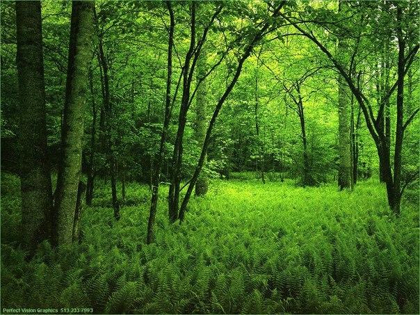 """Дочекатися щастя, або """"Дерево,що росте в мені"""" Жанни Куяви"""