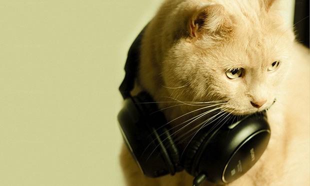 Львів'ян і котів запрошують на концерт